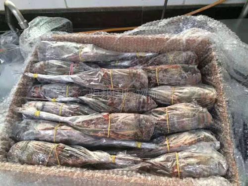 菲律宾进口冻虾报关_进口水产品清关流程