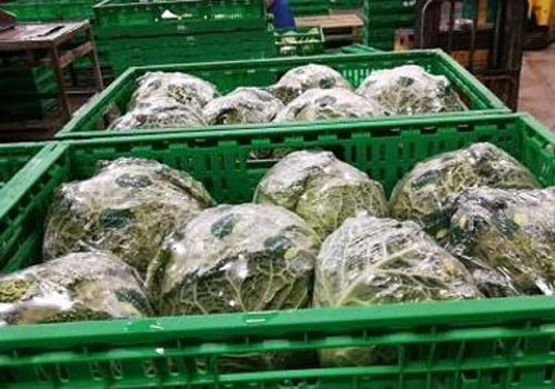 进口生鲜蔬菜监管区配合查验