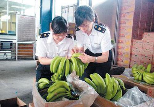 菲律宾香蕉进口清关海关查验现场